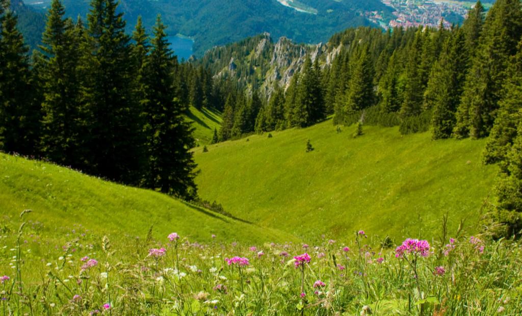 Idyllic pastures in mountains